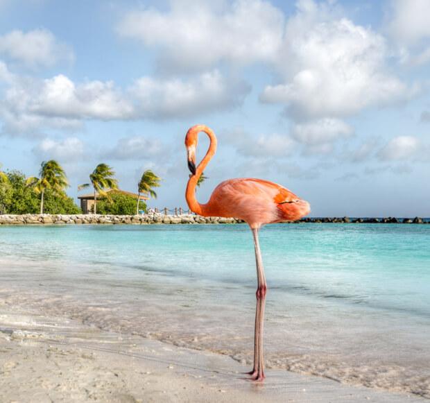 5x One Happy Huwelijksreis op Aruba