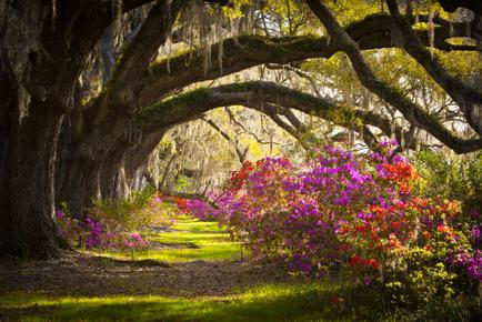 locatie_bloemen_bomen