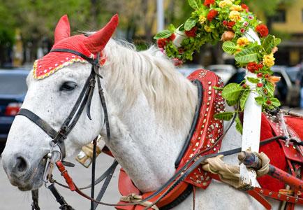 nieuws_2014_paard